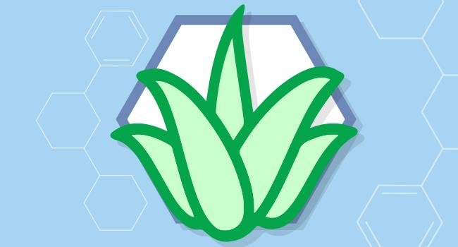 Aloe barbadenis leaf juice helps moisturize & comfort baby's skin