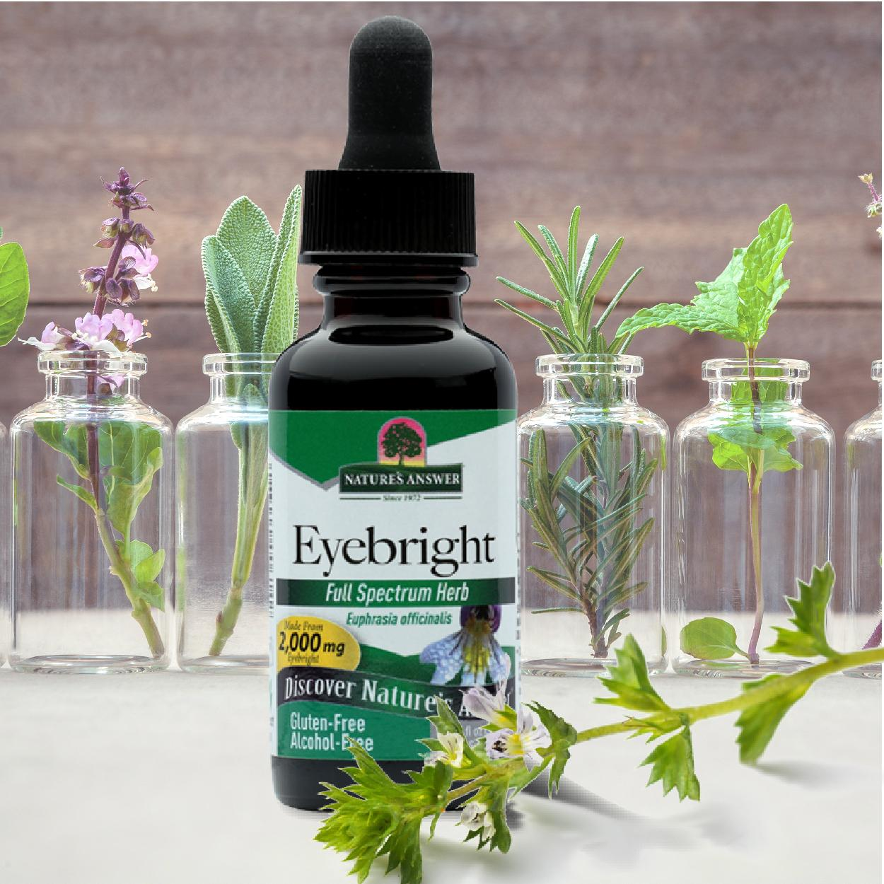 Nature's Answer Alcohol-Free Eyebright Herb, 1-Fluid Ounce