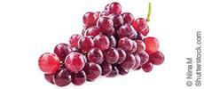 manako OPC Pulver, Traubenkernextrakt für Haut und Bindegewebe