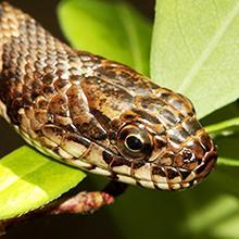 snakes heater