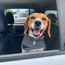 thundershirts can help with travel anxiety