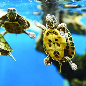 turtle API brand aquarium