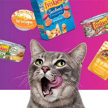 Adult cat with varieties of Friskies wet and dry cat foods and complements
