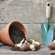 S&M Plantador de bulbos, Verde: Amazon.es: Jardín
