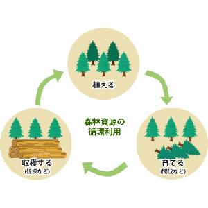 すのこ DIY 棚 スタンダード 桧 ひのき ヒノキ 丈夫 国産 日本 1cm 1.2cm 押入れ カビ防止