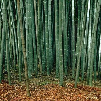 Amazon.com: Hollywood Sillas por Totally Bamboo 27