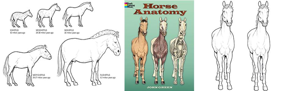 - Horse Anatomy (Dover Nature Coloring Book): John Green: 0800759448135:  Amazon.com: Books