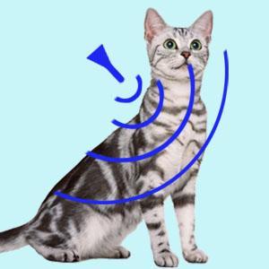 ノミ ダニ マダニ 薬 スポイト おすすめ 効果 人気 定番 かゆみ 皮膚 虫刺され 予防 安全 安心 簡単 獣医 獣医師 専門 医薬品 フロント 子猫 猫 室内