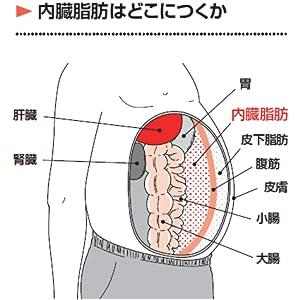 内臓 脂肪 内臓脂肪 体脂肪 ダイエット 池谷敏郎 江部康司 江部 ストンと落ちる