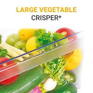 Large Vegetable crisper