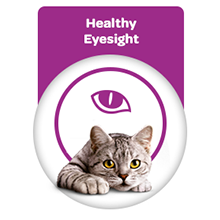 Healthy eyesight for cat