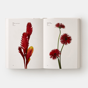 The first book by the New York fashion world's cult floral designers