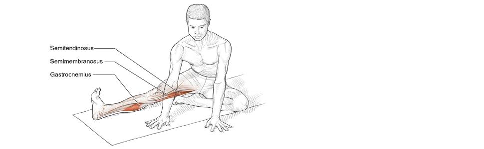 Stretcjing Anatomy