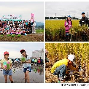 稲刈り体験ツアーの実施風景
