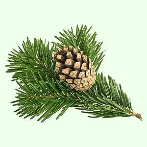fresh pine fragrance