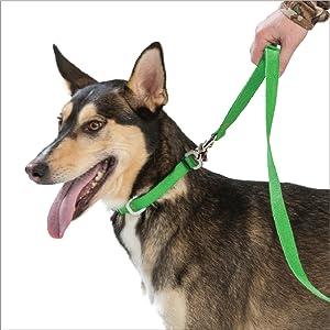 Strolls Collar with Hemp Dog on White