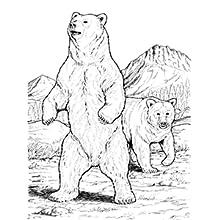 Wild Animals Coloring Book Dover Nature Coloring Book John Green 9780486254760 Amazon Com Books