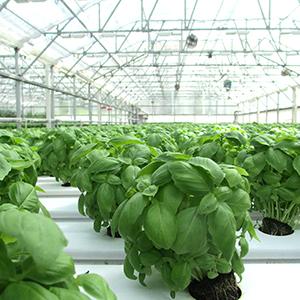 SUPERサイエンス 人類を救う農業の科学