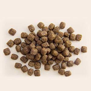 just 6 kibble ingredients rachael ray dog food