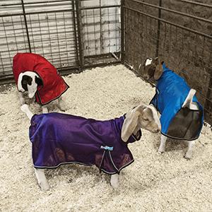 Goat ProCool