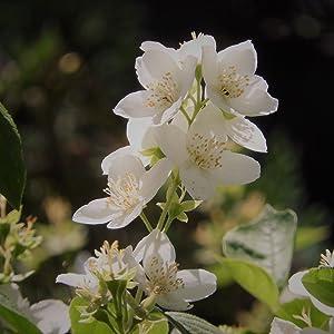 flores mediterraneas; agua de colonia; colonia fresca; colonia de tocador; alvarez gomez