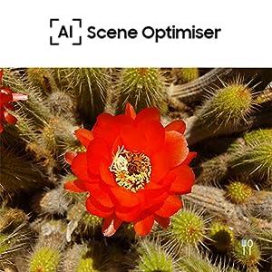 Scene Optimiser