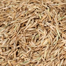 Greenview, grass seed, lawn seed, best grass seed, sun and shade seed, how to plant grass seed