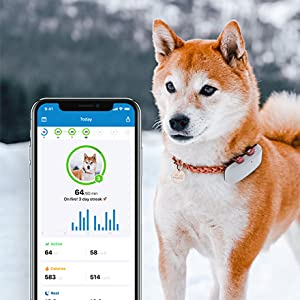 gps tracker for dogs activity tracking for dogs tractive