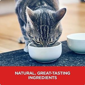 Science Diet, Hill's, cat food, kitten food, dry cat food, wet cat food, cat pouches, cat food pouch
