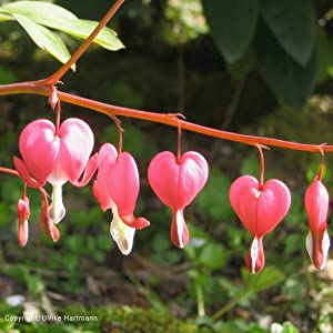 Ulrike Hartmann Liebe geht durch den Garten