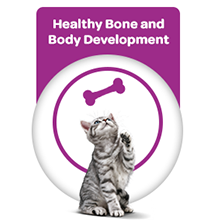 Healthy Bone and Body Developement