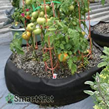 BBB Tomatoes