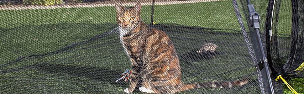 cat in compound