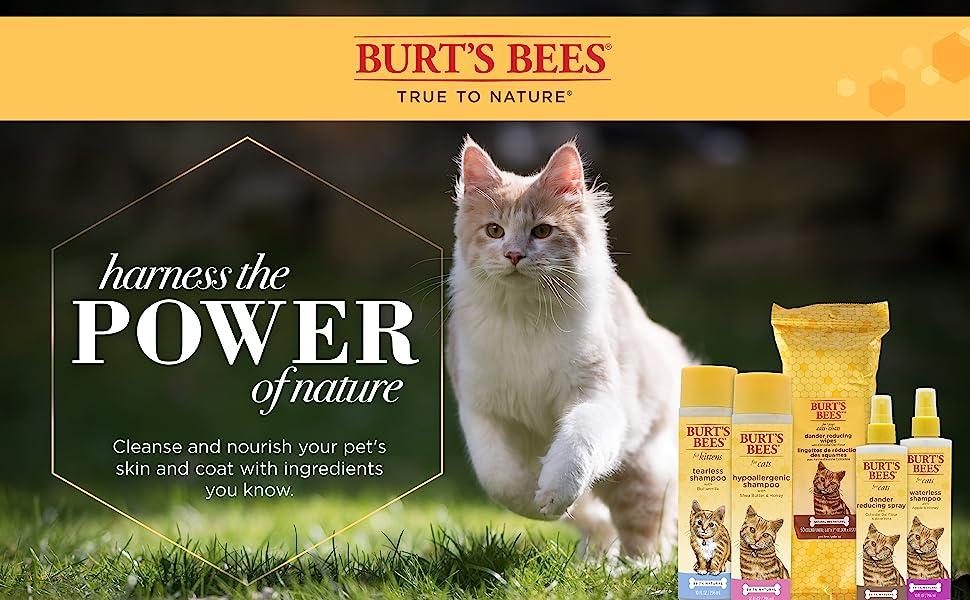 Burts Bees Cat Burt's bees for kittens