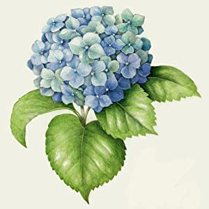 drawing;how to;learn to draw;botanical illustration;art;painting;watercolor;colored pencils;flowers