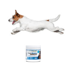 Probiotics for puppies, dogs, kittens, and cats