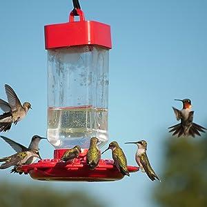 kaytee, bird, hummingbird nectar