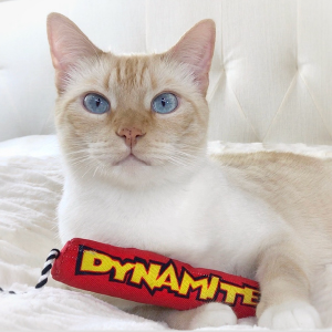 Cat on couch clutching Petstages Dynamite catnip toy