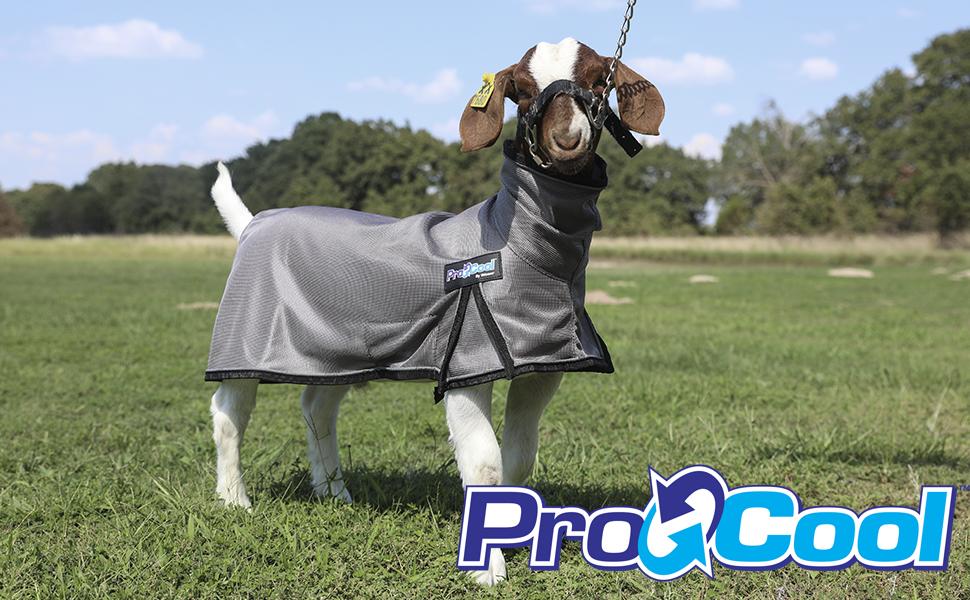 ProCool Header