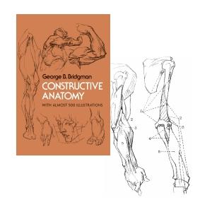 art anatomy