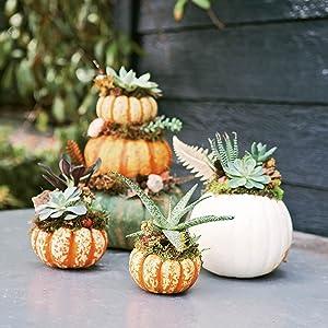 planted pumpkins