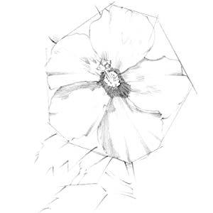 Shading Before shading the petals in step 2, study where the shading falls how petals rippled effect
