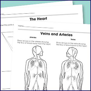 Carson Dellosa | The 100 Series: The Human Body Workbook |