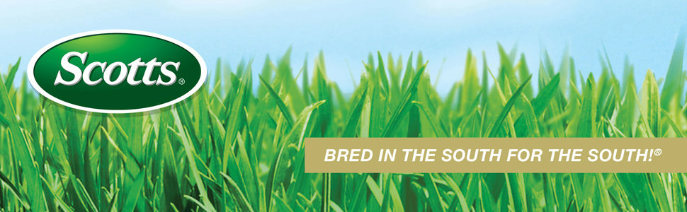 Scotts Turf Builder Grass Seed Southern Gold Mix For Tall Fescue Lawns