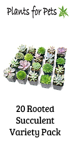air plants airplants tillandsia succulent succulents decor house indoor terrarium plant plants