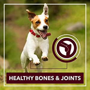 HEALTHY BONES & JOINTS