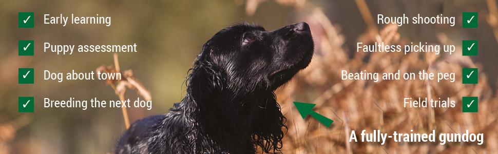 dog training, gundog training, spaniel, janet menzies