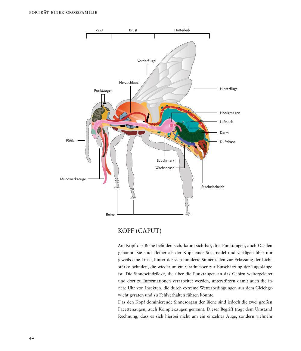 Das große Buch der Bienen: Amazon.de: Jutta Gay, Inga Menkhoff: Bücher