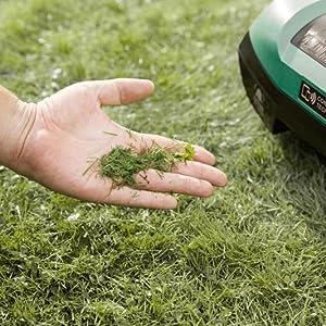 Der Frisch gemähte Rasen dank dem Bosch Indego 350 Connect