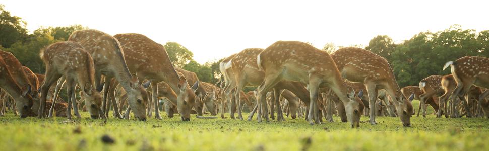 奈良公園 奈良の鹿